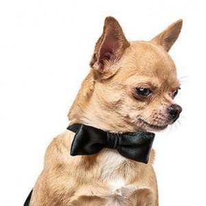 Бабочка для собак Pet Fashion