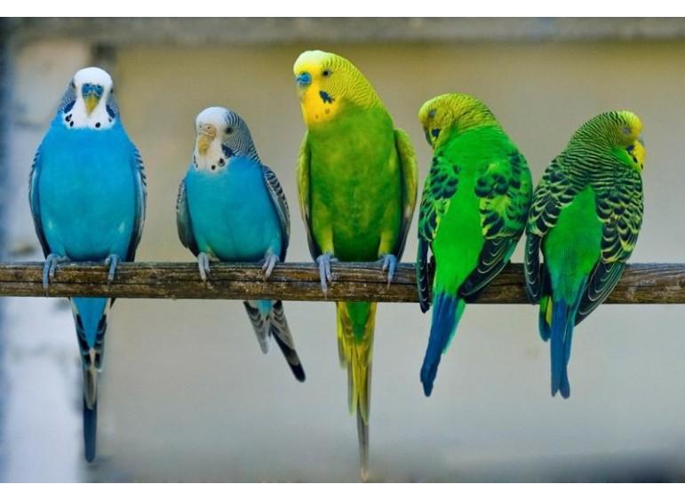 Создание попугаю комфортных условий