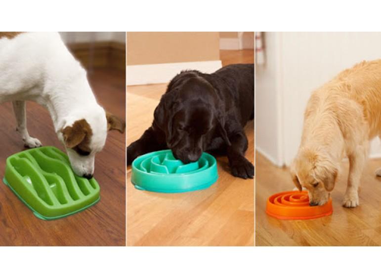 Как решить проблему с лишним весом  и перееданием вашей собаки
