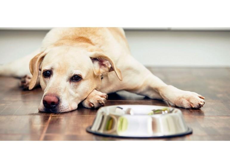 8 причин, почему собака не ест из миски