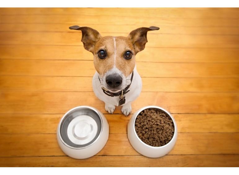 Как правильно выбрать миску для собаки