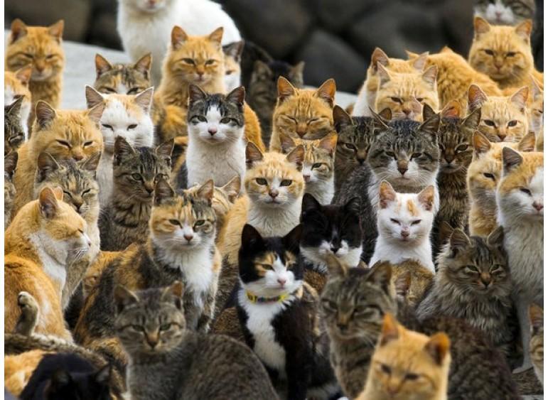 Кошачьи обычаи