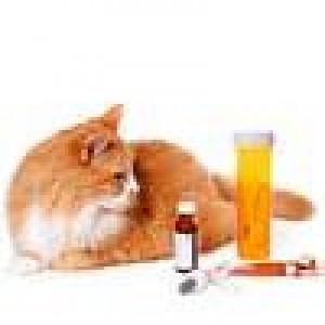 Суспензии для кошек